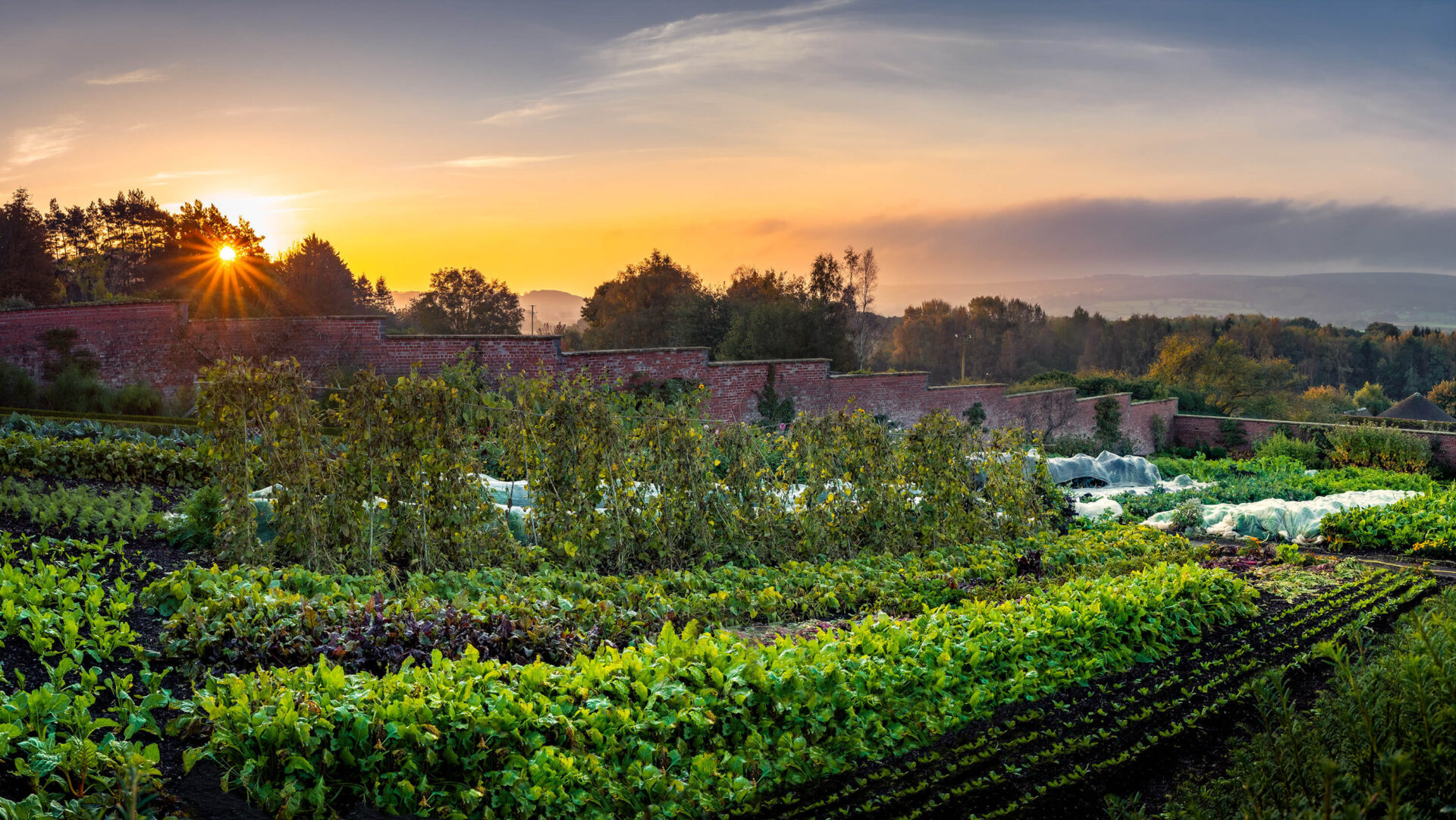 Sunrise Over The Walled Garden Vegetables